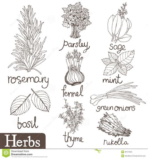 herb garden coloring pages free coloring pages of thyme herb
