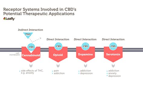 Cannabanoid Detox by Can High Cbd Cannabis Curb America S Opioid Addiction