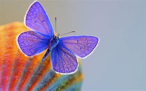 imagenes de mariposas oscuras hermosas mariposas taringa