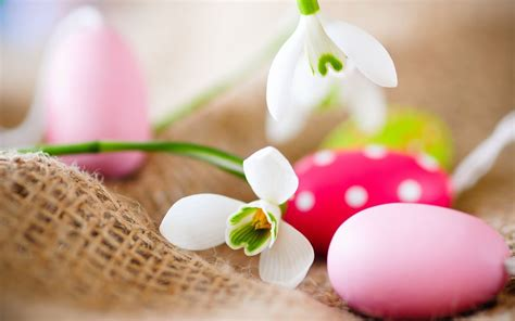 white flowers  eggs  easter wallpapers  images