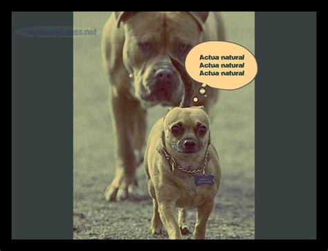 imagenes felices pascuas para facebook fotos chistosas con comentarios www imgkid com the