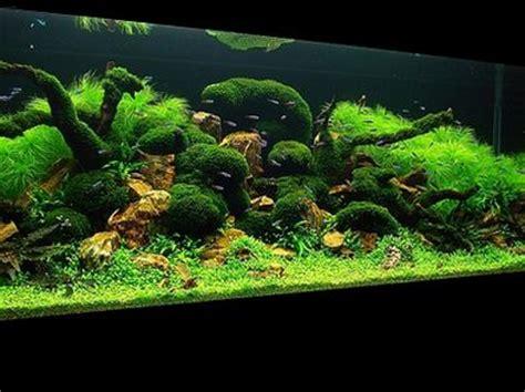 aquascape design tv mystical forest aquascaping and aquarium on pinterest