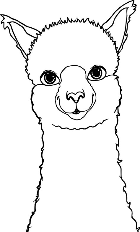 alpaca drawing coloring page wecoloringpage