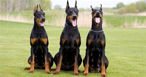 tattoo cost in kerala 191 por qu 233 las personas somos m 225 s emp 225 ticas con los animales