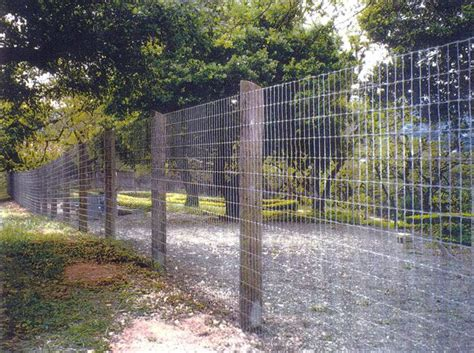 backyard fencing for dogs wood and wire fence back yard ideas pinterest
