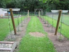 Wine Trellis Growing Grapes In My Vineyard Trellis Construction