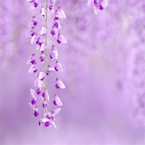 Purple Flower Backgrounds Wallpaper Cave Purple Flower Backgrounds Graphicpanic