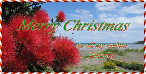images of christmas in new zealand my views of new zealand merry christmas