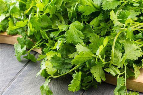 Is Dried Cilantro For Detox by 5 Magic Herbs To Add To Your Daily Meals For Health Benefits