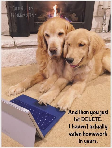 golden retriever meme best 25 golden retriever quotes ideas on sweet quotes golden