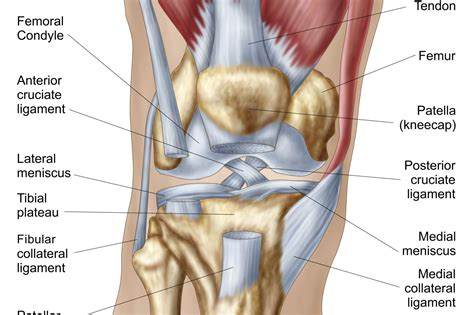 knee diagram what is causing your knee