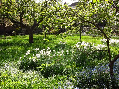 Orchard Garden by S The Orchard Garden At Fenton House In April