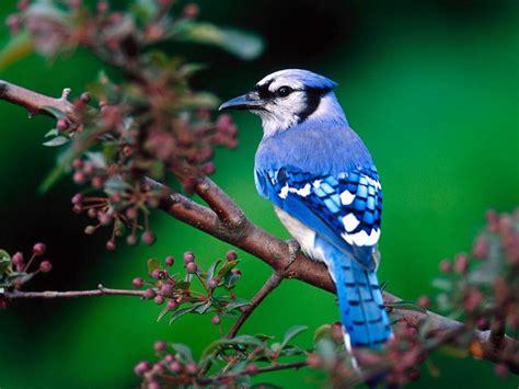 blue bird on tree branch wallpaper 1024 215 768 birds wallpapers