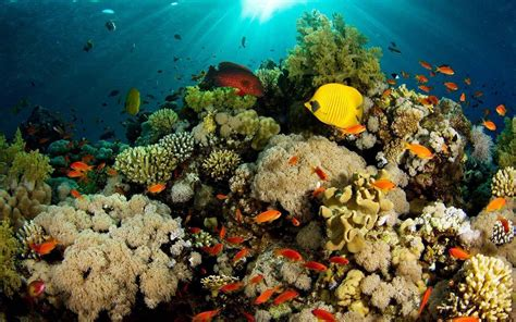 reef wallpaper nature hd desktop wallpapers 4k hd coral reef wallpapers wallpaper cave