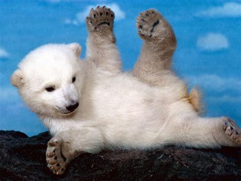 imagenes animales mas tiernos animales tiernos los animales mas tiernos del mundo