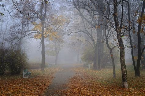autumn park alley benches fog hd wallpaper
