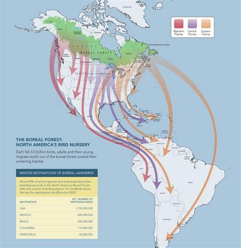 america bird migration map boreal birds need half photos and graphics for media