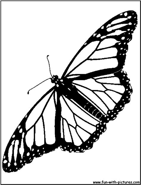 coloring page for monarch butterfly monarch butterfly coloring pages download and print for free