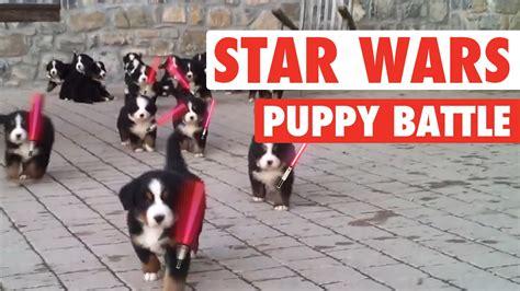 wars puppy wars the awakens puppies lightsaber puppies battle