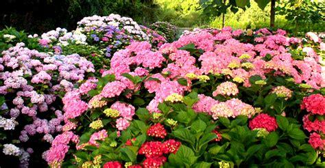 Schädlinge An Hortensien 3124 by Pflanzen Hortensien Hortensien Pflanzen Und Pflegen