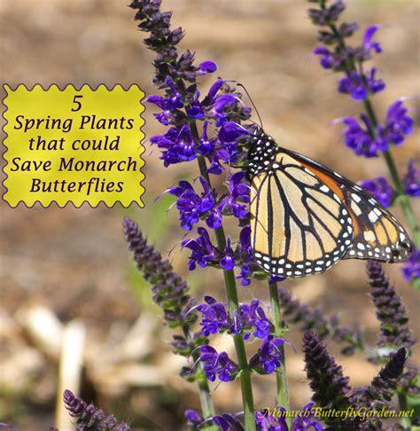 spring plants   save monarch butterflies