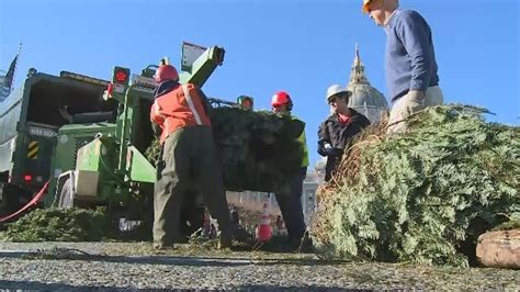 san francisco kicks off christmas tree recycling program