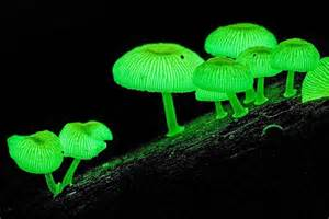 glow in the plants the magical world of australia s fungi blueprint