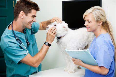 dog trainer   dog calm  visiting  vet