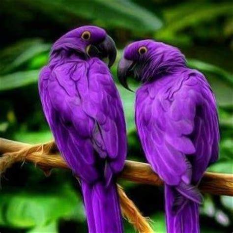 Southwest Flight Sale by Purple Parrots 36 Pieces Jigsaw Puzzle