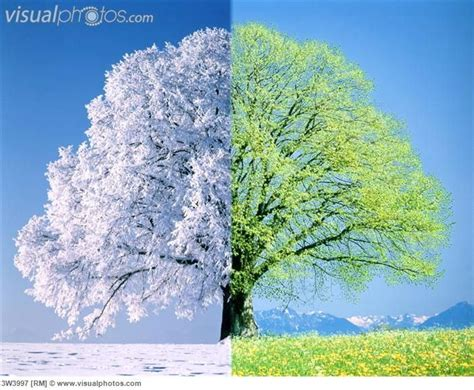 164 best 4 seasons winter 16 best images about seasons on seasons trees