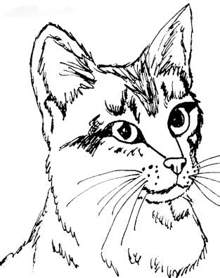 coloring pages of real cats realistic coloring pages bestofcoloring com