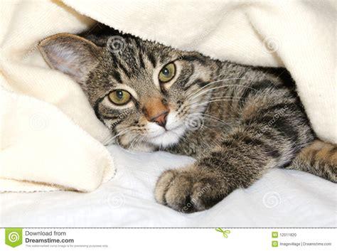 Decke Katze by Katze Unter Einer Decke Stockfoto Bild 12011820