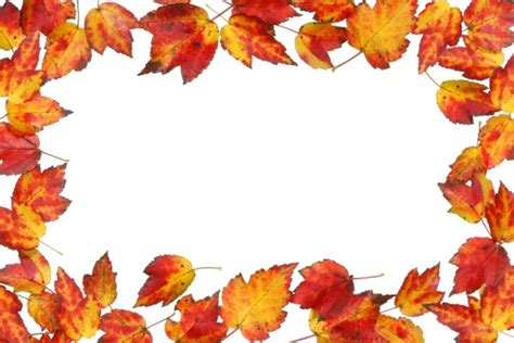 Five Leaves Border 04 Hd Picture Free Stock Photos In Leaf Border Template