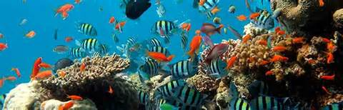 Coral Reef Biome   Animal Facts and Information