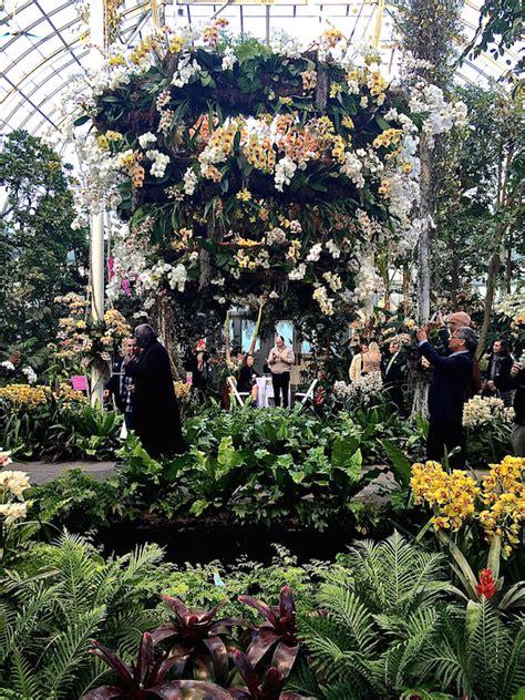 the new york botanical garden orchid show quintessence the new york botanical garden orchid show quintessence