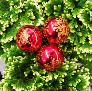 traditional christmas plants mike s garden top 5 plants