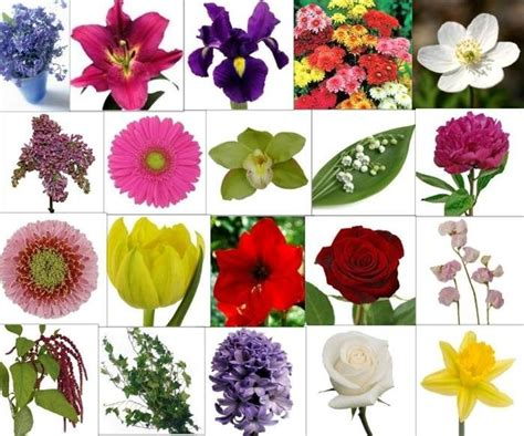 Types Of Flowers And Their Meanings by Types Of Flowers And Their Meanings Flowers