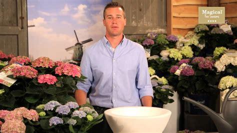 wann pflanzt magical four seasons wann pflanzt eine hortensie am