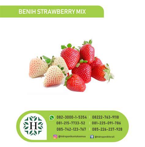 Jual Benih Strawberry Hidroponik benih sayuran jual alat bahan media hidroponik