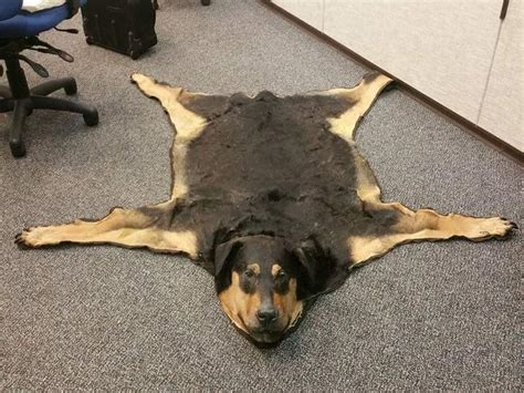 best rugs for dogs someone has turned their dead family into a rug and is selling it