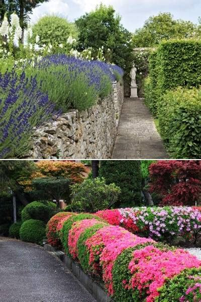 topiary ideas great decorative plants