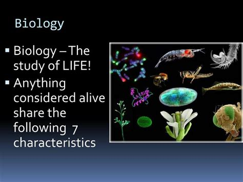 microsoft powerpoint themes biology ppt the 7 themes of biology powerpoint presentation id