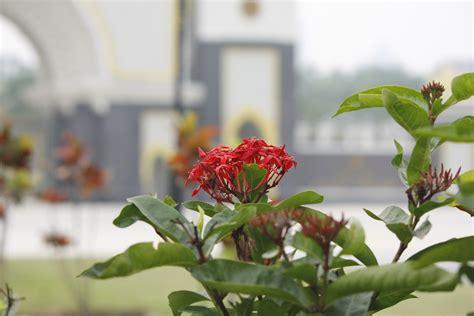 Bunga Jarum the national palace malaysia ku klik kamera ku