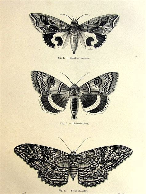 1860 antique moths butterflies print original vintage