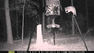 Raccoon Proof Your Deer Feeder raccoon proof 55 gallon feeder doovi