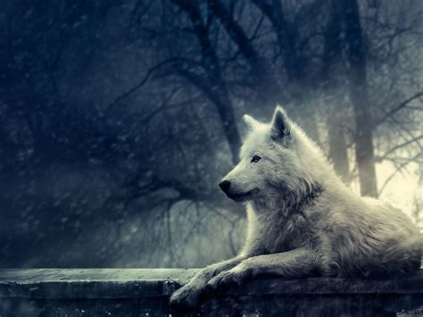 foto  wallpaper serigala ukuran besar