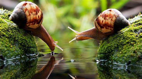 macro photography photo sharing site snail macro photography free wallpapers backgrounds