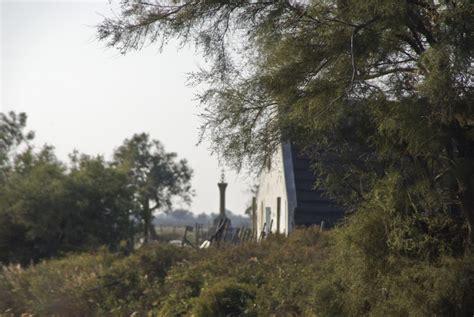 Le Tamaris Arbre by Le Tamaris Gacholo De Camargue Botanique Jardins Paysages