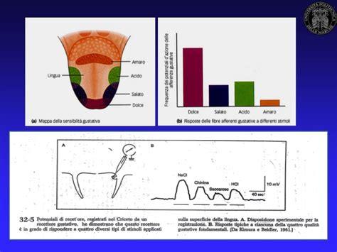 libro fisiologa del gusto fisiologia del gusto prof mara fabri