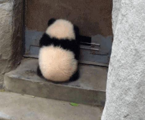 imagenes gif de kung fu panda panda door gif find share on giphy